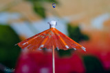 Always good to have an umbrella, even if it is just a few drops...