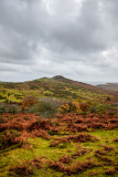 Dartmoor - Sharp Tor