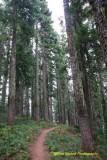 Tacoma Pass - Cascade Crest 100 Mile Endurance Run 2018