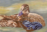 Wheeler National WIldlife Refuge - Spring & Junior Duck Stamp Judging