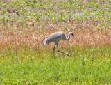 Wheeler National Wildlife Refuge - 05/09/2017
