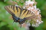 Butterflies, Dragonflys, and Moths