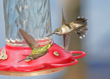 Hummingbirds - 2018 Collection Gallery 1