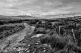 Track on Bodmin Moor in Cornwall