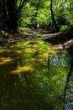 Core Hill Woods in East Devon