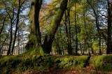Scene in Haldon Forest