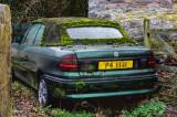 Mouldy old car