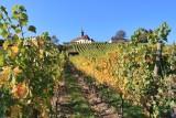 Gengenbach. Walking in the vineyards