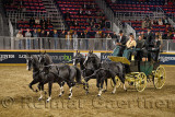 Four black horses at Green Meadows Four in Hand Coaching Class performance at The Royal Horse Show Ricoh Coliseum Exhibition Pla