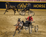 Female driver in four wheel viceroy at Harness Pony Open competition at Ricoh Coliseum at 95th Royal Agricultural Winter Fair Ro