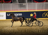 Female driver in High strutting Harness Pony Open competition at Ricoh Coliseum at 95th Royal Agricultural Winter Fair Royal Hor
