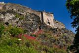 Red Valerian on the Castle Rock cliff face of Edinburgh Castle fortress with blue sky Edinburgh Scotland UK
