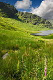 Beinn an Lochain mountain of the Arrochar Alps in sun with Loch Restil and green grass bracken and foxglove at Rest and Be Thank