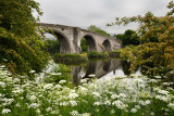 Medieval stone arch Old Stirling Bridge over the River Forth with Queen Annes Lace white flowers Stirling Scotland UK