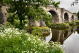 Old Stirling Bridge reflected in the River Forth with medieval stone arches and Queen Annes Lace white flowers on riverbank Stir