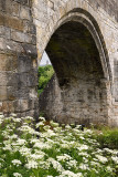 Medieval stone arch of the Old Stirling Bridge over the River Forth with Wallace Monument and white Queen Annes Lace flowers Sti