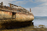 Rotting wood of shipwreck on Salen Bay with seaweed at low tide on Isle of Mull Inner Hebrides Scotland UK