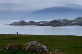 Woman walking her dog with view of Isle of Mull cliffs and Ben More mountain over Sound of Iona from Isle of Iona Abbey at dusk