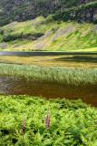 Detail of Loch Achtriochtan on the River Coe in green Glen Coe valley with Aonach Dubh of Bidean nam Bian Scottish Highlands Sco