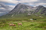 Three moulting Red Deer at River Coupall under Stob Dhearg peak of Buachaille Etive Mor mountains at Glen Coe Scottish Highlands