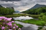 Rhododendron flowers at the River Leven at the Head of Loch Leven in Kinlochleven with Mam na Gualainn ridge Scottish Highlands