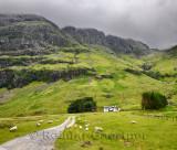 Black faced sheep grazing at Achnambeithach cottage under Aonach Dubh waterfall at Bidean nam Bian Glen Coe Scottish Highlands S