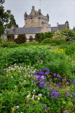Wet Flower Garden with lush perennial flowers south of Cawdor Castle after rainfall in Cawdor Nairn Scotland UK