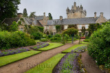 Wet Flower Garden with purple perennial flowers south of Cawdor Castle after rainfall in Cawdor Nairn Scotland UK