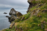 Bow Fiddle Rock quartzite sea arch and rocks on cliff with Thrift Trefoil and grass at Portknockie on the North Sea Atlantic oce
