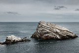Quartzite sea rocks beside Bow Fiddle Rock with seagulls and Cormorants in Moray Firth North Sea at Portknockie Scotland UK