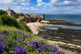 St Andrews Castle ruins on rocky North Sea coast overlooking Castle Sands beach in St Andrews Fife Scotland UK with purple geran