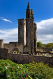 East tower of St Andrews Cathedral with St Rules square tower and cemetery tombstones and rose bush St Andrews Fife Scotland UK