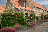 Stone house with red valerian and climbing roses in garden at Market Place Holy Island of Lindisfarne Northumberland England UK