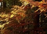 les feuilles rousses