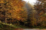 Lutzelhouse forest