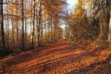 forêt de Lutzelhouse