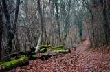 forêt de Dorlisheim