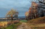 les vignes à Dorlisheim