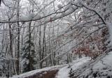 la forêt de Lutzelhouse en hiver