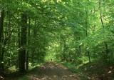 la forêt de Westhoffen