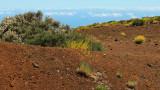 Teide - vegetation