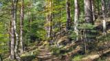 la forêt de Wangenbourg
