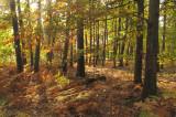 la forêt de Haguenau - 2