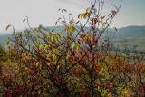 les buissons en automne