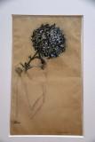 Chrysanthemum (1909) - Piet Mondrian - 4024