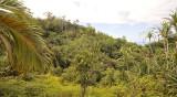 Praslin forest.