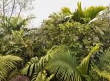 4_endemic_palms.jpg