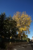 Quebec fall color