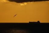 Frigatebird, ship, and sunset in Aruba