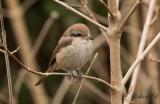 Birdtrip to the Netherlands 2017